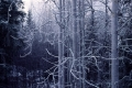 Muita talvikuvia -> 2006