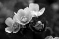 Kevätkuvia