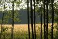 Kasveja ja muita kesäkuvia 2007