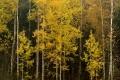 Puita ja metsää syksyllä 2007